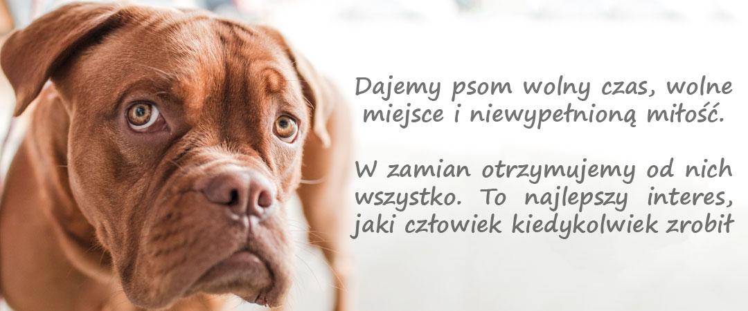 Dajemy psom wolny czas, wolne miejsce i niewypełnioną miłość. W zamian otrzymujemy od nich wszystko. To najlepszy interes, jaki człowiek kiedykolwiek zrobił - M. Facklam